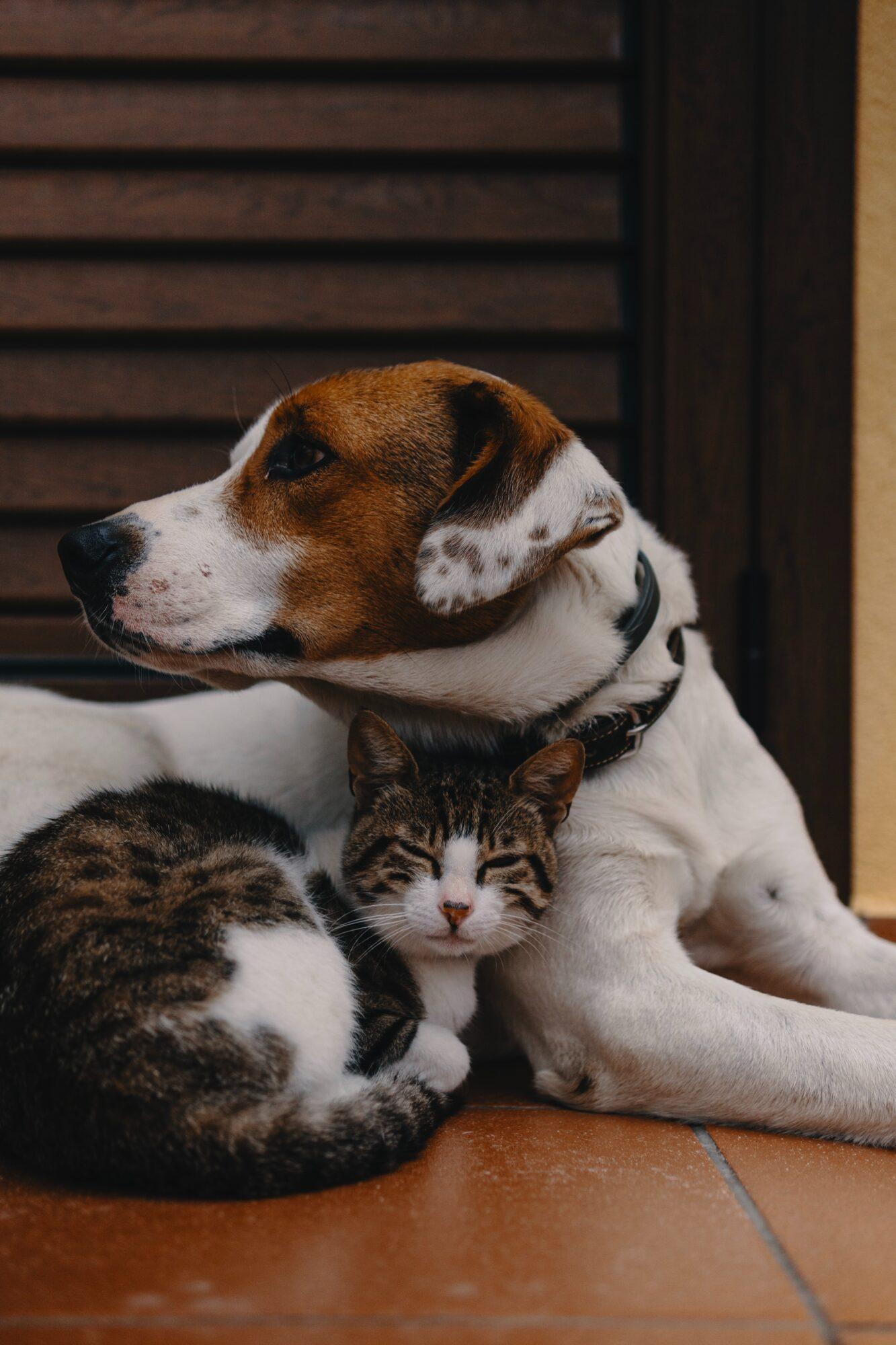 PetLux.dk – kvalitetsprodukter til dine kæledyr